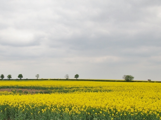 The Cotswolds, rapeseed oil fields